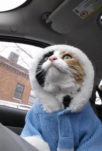 Fashion Kitty Takes Milan?