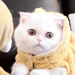 Spa Day Kitty