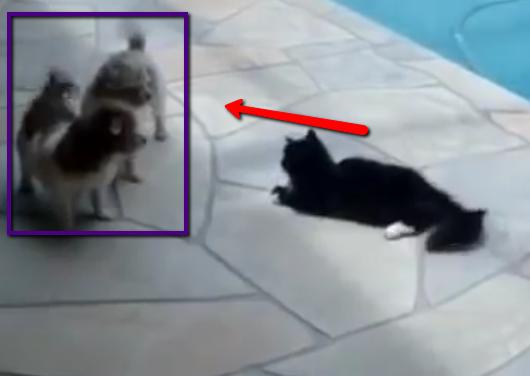 Kitty's Sweet Revenge on Unsuspecting Pups