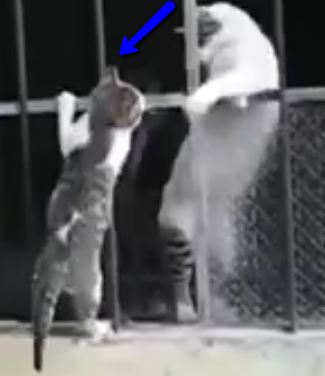 Watch as Mama Kitty Rescues Baby Kitten