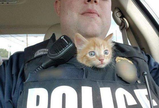 Police Kitty Serves and Protects with Cuteness