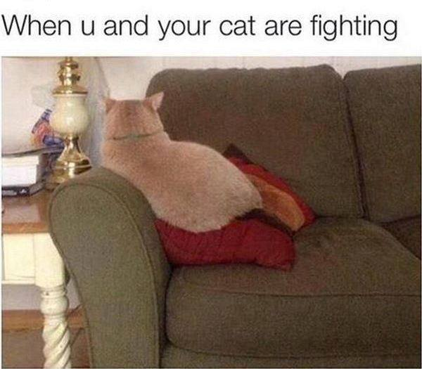 When You and Kitty Fight | Funny Cat Memes