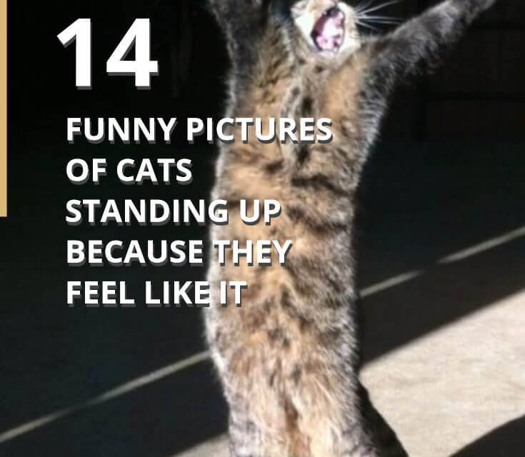 14 Pictures of Cats Standing Up to the Man – #5 & #14 are Hilarious!