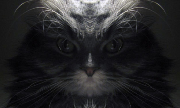 James Bond Villain Kitty or Just Strange Effects?