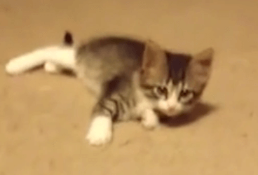 "Watch What This Kitten Does When He Spots ""Intruder"""