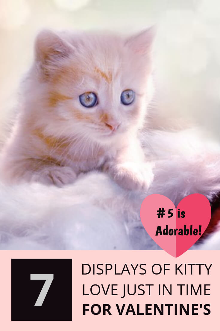 Kitty Love for Valentines Day #5 is the Sweetest! [Adorable]