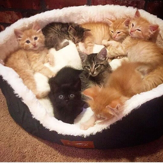 Kitten Love times 10 - basket full of kittens