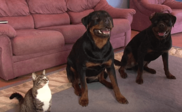 This Kitty Is A Real Copy Cat, Watch What She Does When Her Owner Points At Her!