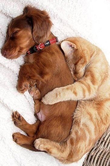 Kitty Puppy Love