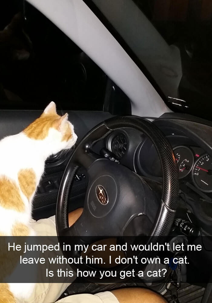 Some kitties live to jump behind the steering wheel for a drive!