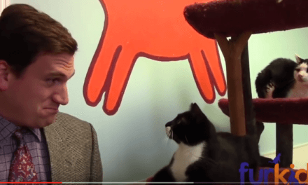 Animal Shelter's Hilarious Cat Commercial Is A Low-Budget Masterpiece