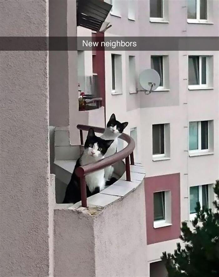 Meet the kitties next door!