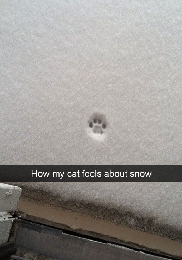 This kitty does not like snow!