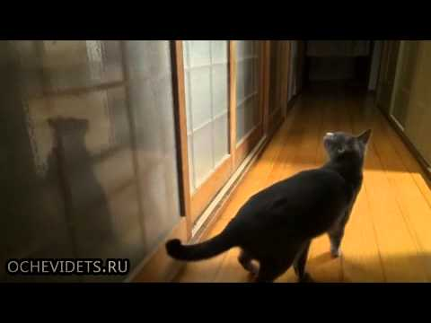 Crazy Little Kitten Enjoys a Kicking Good Time! [Too Cute!]