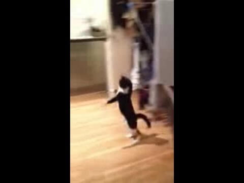 Now This Cat Can Hop! [Funny Mr. Bouncy Cat]