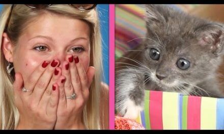Cat Lovers Get Surprised By A Box Of Kittens