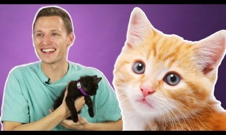 People Hold Kittens For The First Time